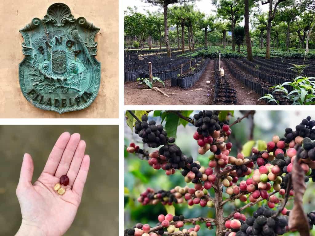 Antigua Coffee Plantation