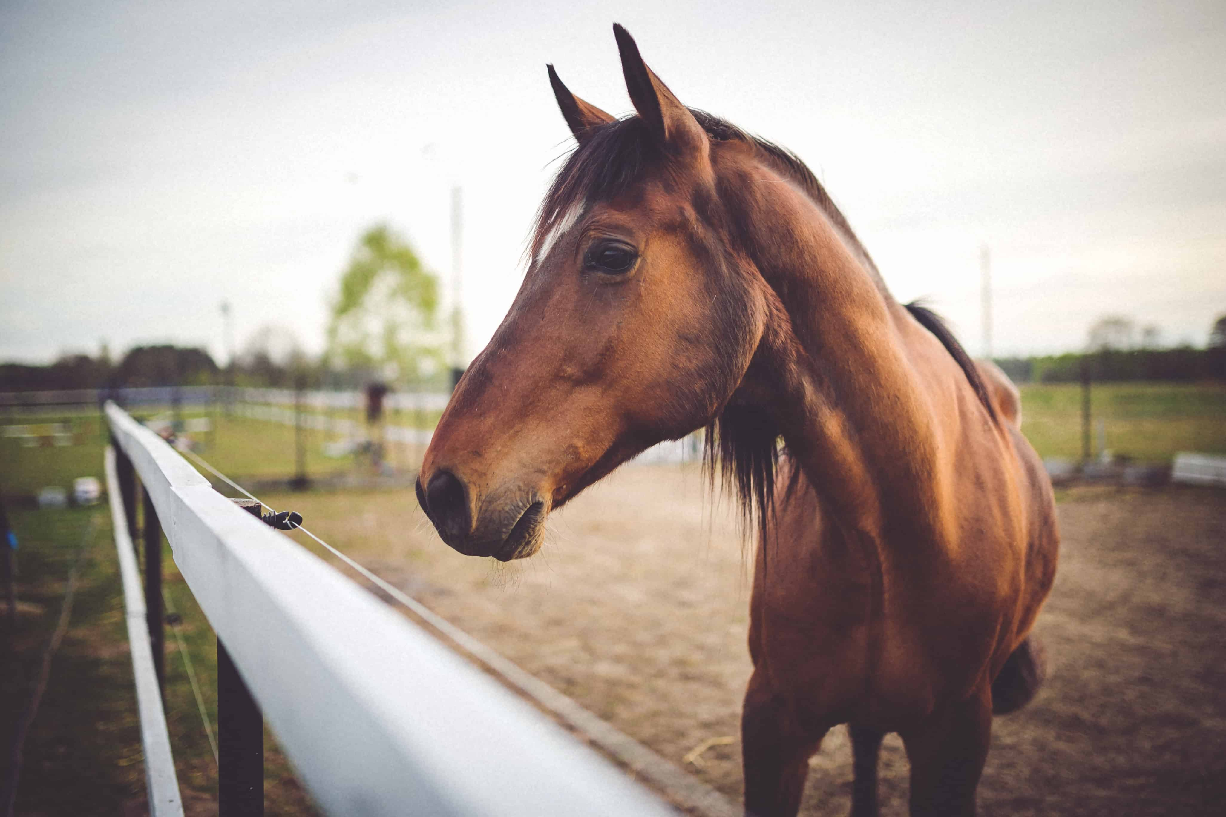 Thinking About Starting An Equine Business?