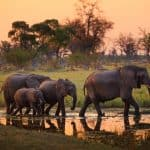 Top Reasons Botswana Should Be Your Next Destination